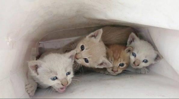 Anak Kucing yang Hampir Mati Ditemukan di dalam Tas Kertas dengan Sebuah Pesan 2